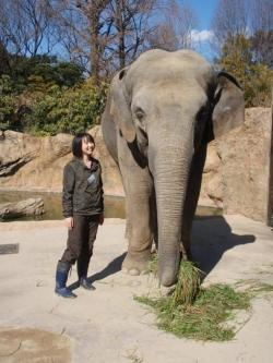 Biologist Naoko Irie and one of her mathmatical elephants (Photo courtesy of Naoko Irie)