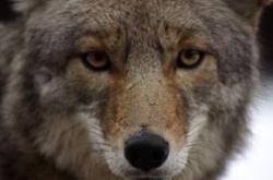 Ecotourists scare away endangered wildlife