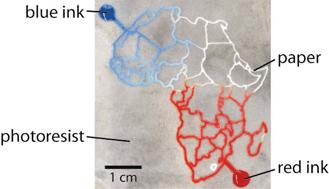 A microfluidic device in paper: the
