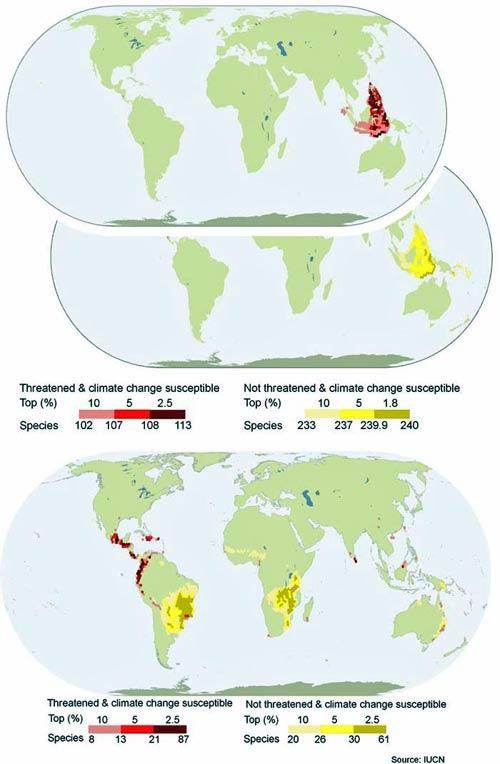 These maps show which regions are home to species of warm water reef-building corals (top) and amphibians (bottom) that are both susceptible to climate change and threatened by other factors