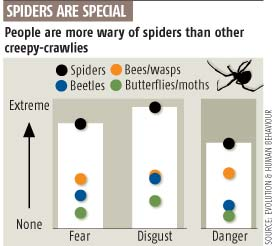Spiders are special