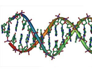 Strands of DNA can be easily made into nanoscale fibre optic cables