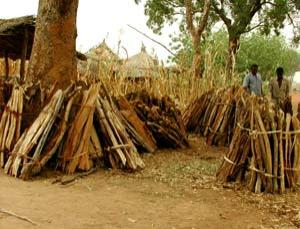 A villager selling firewood, Burkina Faso, October 2000