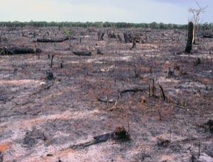 Cleared natural forest, Kenya, February 1981