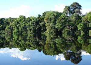 Protected 'Igapo' forest on the Rio Negro, Brazil, July 2007