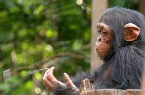 Can animals escape the present?