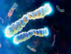 The telomeres that cap our chromosomes could be the key to halting ageing