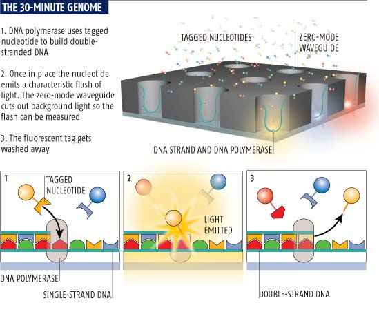 The 30-minute genome
