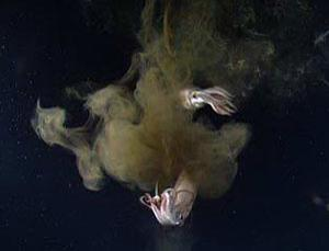 Jumbo squid will become sluggish as the oceans acidify thanks to CO2 emissions