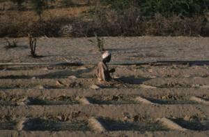Man praying in irrigated vegetable plots in village threatened by encroaching desert, Sudan