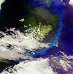 Plankton blooms - can seeding them with iron cool the planet?