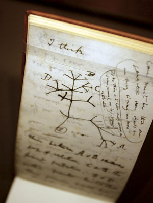 "This ""Tree of Life"" sketch is seen in Darwin's ""B"" notebook, at a press preview of the new ""Darwin"" exhibition at the American Museum of Natural History November 15, 2005 in New York City"