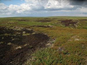 Peat plateau landscape with peat circles (Photo courtesy Maija Repo)