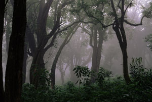 Rainforests like this one around Mount Kilum, Cameroon, are still soaking up our carbon pollution surprisingly fast