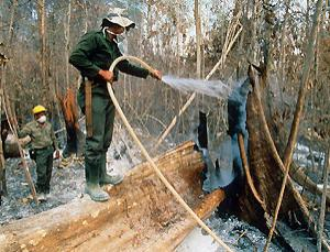 Firefighters at work Samarinda, Borneo. Forest fires in this region were unknown before human activity escalated in recent years