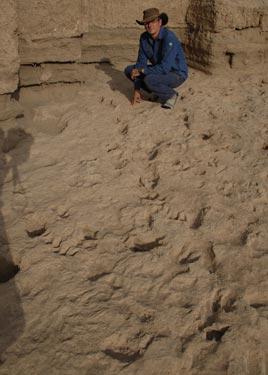 Researcher Matthew Bennett at the fossil footprint trail