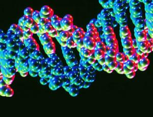 This computer artwork shows the atomic structure of a DNA molecule. DNA from people in the UK may be being tested without their consent, despite a pioneering law that came into force more than two years ago expressly forbidding the practice