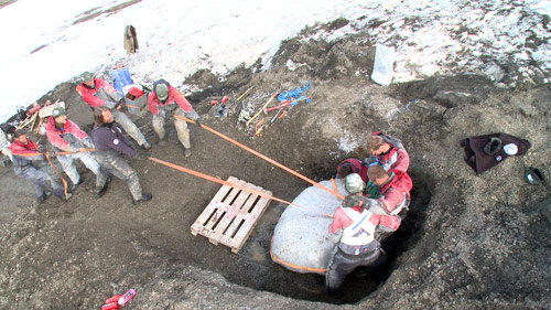 The team struggles to haul the plaster-encased skull from its resting place (Illustration: Naturhistorisk Museum)