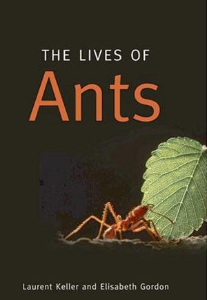 A new book explores the ins and outs of ant life