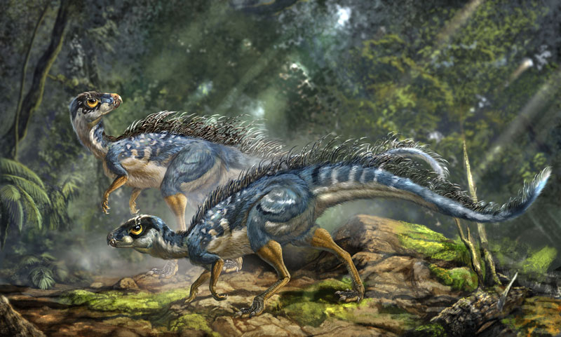 Reconstruction of Tianyulong confuciusi, a feathered heterodontosaurid ornithischian dinosaur (Illustration: Li-Da Xing)