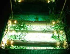 Adding light to a fertilized plant community prevented the loss of biodiversity
