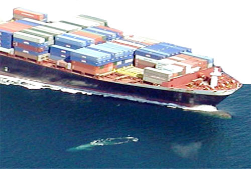 Near misses at the bow of a container ship