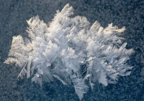 Frost flowers on the ice shelf near Barrow, Alaska