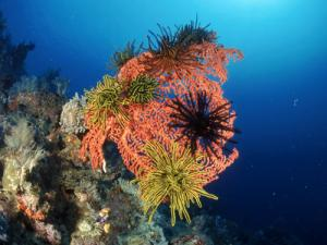 This fan coral is in good health, and many of its relatives may stay healthy if they can upgrade their in-house algae
