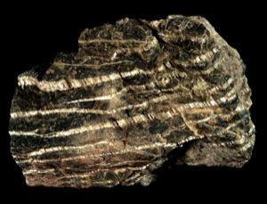 Thin bands of the fibrous asbestos mineral chrysotile in a chunk of serpentinite. Did it help life evolve?. This sample measures 85 millimetres across.
