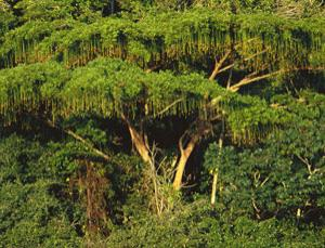 Brazil's Atlantic forest is a biodiversity hotspot; and it's in very bad shape
