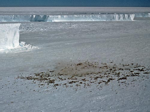 The tell-tale colour of faeces can give away a penguin colony