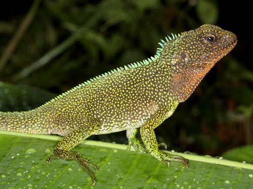 The conservation biologists also discovered what may turn out to be a new lizard