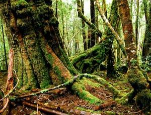 Tiny mosses and liverworts were greening the earth much earlier than previously thought.