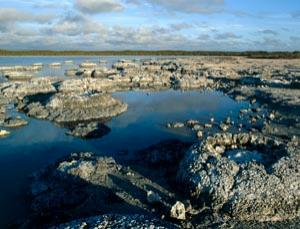 Some of the earliest traces of animal life have been found in stromatolites.