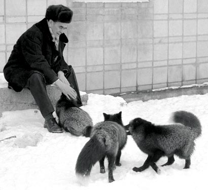 Dimitri Belyaev in 1984 with some of the tame silver foxes he bred in just a few generations