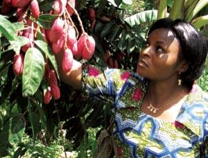 There is a big future for some of Africa's native fruit