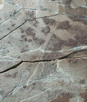 Smears in 565 million year old rocks are the first signs of mobile life forms that have been found; they are up to 13 millimetres wide
