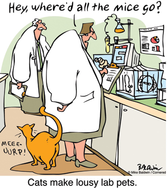 Many cartoons, dubbed theory-of-mind jokes, rely on the viewer understanding a situation from two different peoples' points of view (in this case, the cat and the scientist's mindsets). These jokes are particularly difficult for people with autism to understand