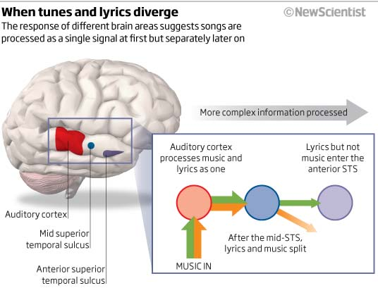 essay on music and the brain 'the power of music' to affect the brain science all but confirms that humans are hard-wired to respond to music studies also suggest that someday music may even help patients heal from parkinson's disease or a stroke.