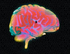 Taking a different look at the brain