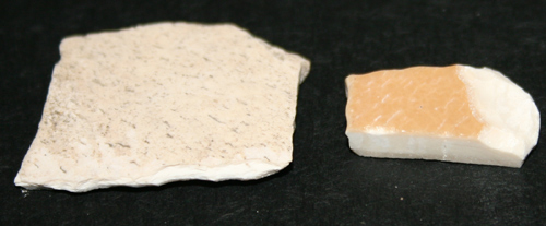 Moa and Aepyornis (elephant bird) eggshell shown side by side