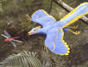 Current depictions of Archaeopteryx may have to change