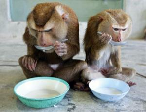 Primates, like humans, can be left or right-handed