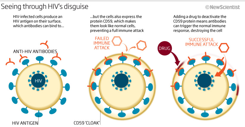 Seeing through HIV's disguise