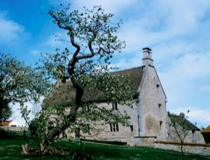 Newton's inspirational apple tree is still going strong