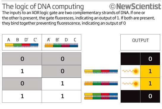 The logic of DNA computing
