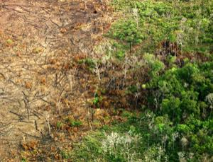Fire leakage from a deforested land spreads into the surrounding forest in Mato Grosso state, southeast Amazonia