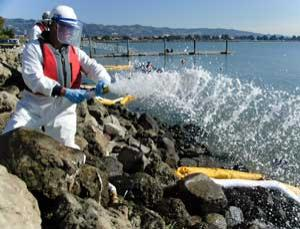 Dispersants clear the visible oil, but what happens to the marine life?