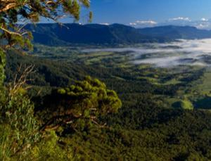Border Ranges National Park in New South Wales, Australia – pulling its weight?