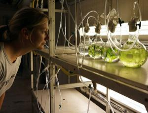 Taking a look at algae's green credentials